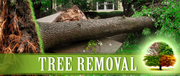 Tree Service 100 Images Warming Tree Services Inc Tree